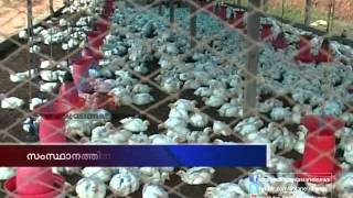 Unauthorized poultry farm in kerala : Asianet News investigation