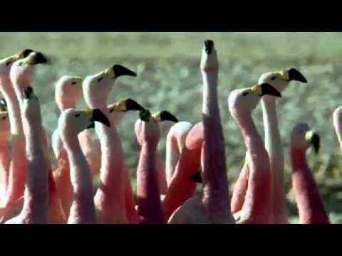 La Tierra, su fauna y flora - Видео онлайн
