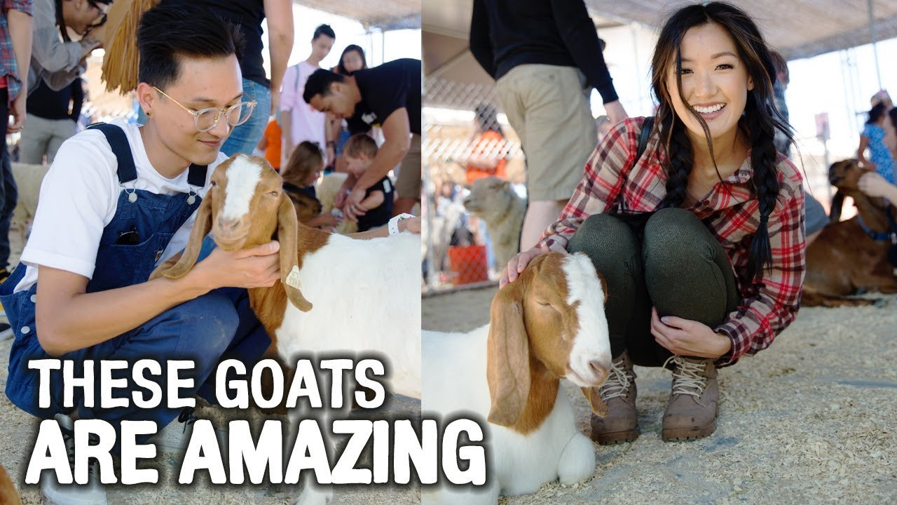 these-goats-make-us-happy-wahlietv-ep622