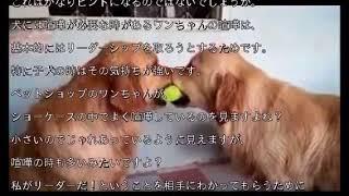 愛犬が他の犬と喧嘩し始めても、神経質になって止めないで! それなりに...