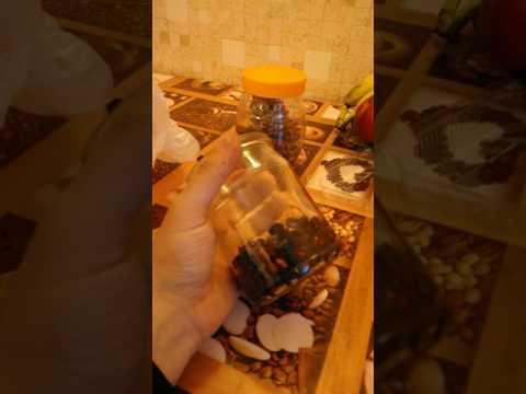 Вопрос: Как вырастить ливанский кедр из семечка?