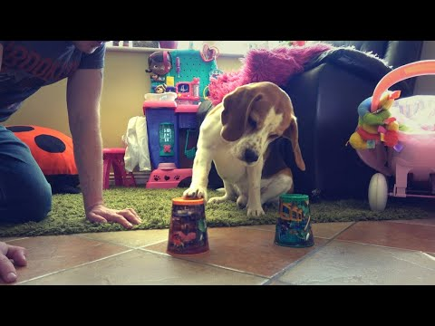 Teaching cute dog how to gamble | Charlie The Beagle