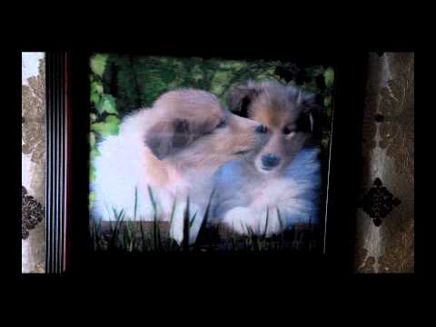 Картина с собаками