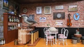 Kim´s Bird Theater 3, Cool Bird Pub Bar Feeder