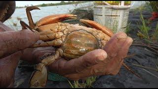 小池抓到一只蟹中之王——黄油蟹,据说2000块一只,发财啦