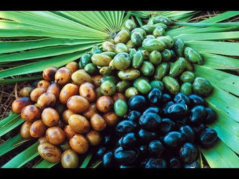saw-palmetto-may-help-with-benign-prostatic-hyperplasia,-bph,-urinary-tract-symptoms,-prostate