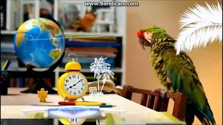Рекламная заставка (Первый канал, 2017) Школа и Лето, Рио