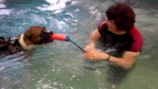 Lacey The Boxer Dog Loves To Swim