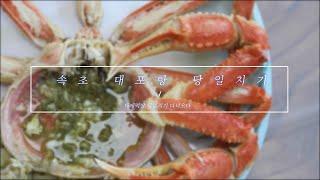 속초 당일치기여행 / 속초 대포항맛집 대게맛집 대게+회…