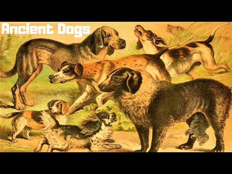 10 Most Ancient Dog Breeds On Earth 3