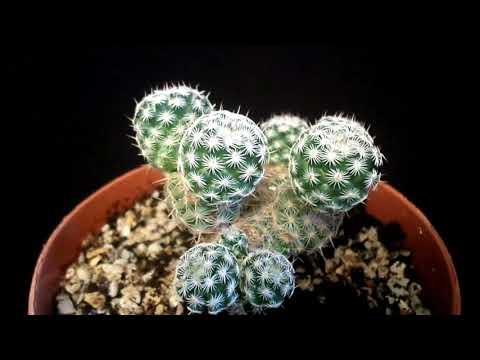 Cactus plants image download