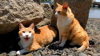 海辺の猫ちゃん達が何か話し掛けてきた。
