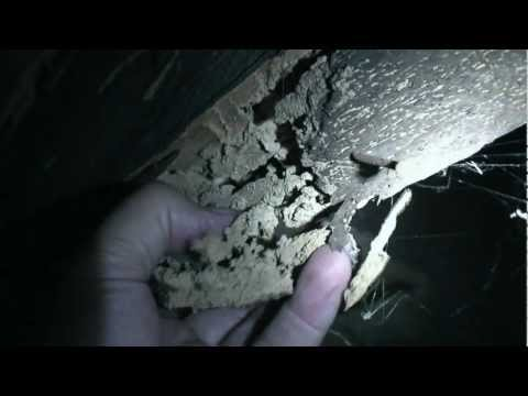 About termite damage to structural timbers