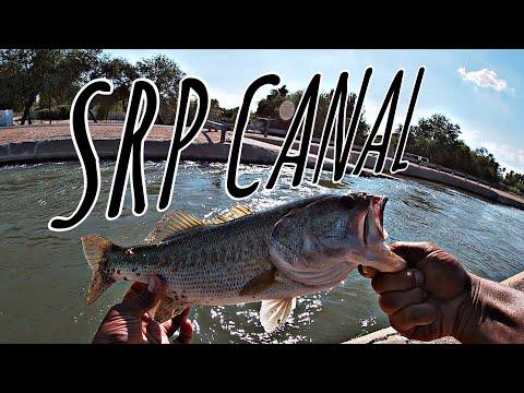 Arizona Urban Bass Fishing (SRP Canal)