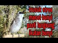 Trucuk Macet Bunyi Stres Pasti Ikutan Bunyi Jika Di Puterin Suara Panggilan Trucuk Ini Bird Gacor  Mp3 - Mp4 Download