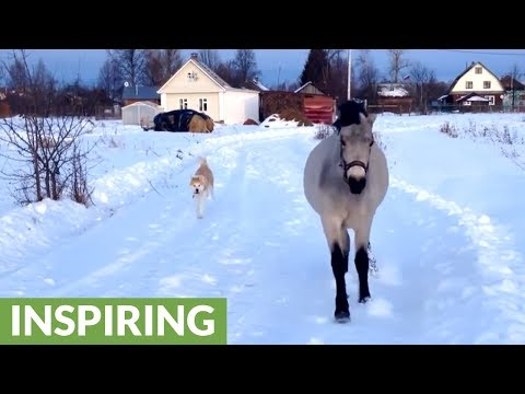 Friendly horse and dog play around in the snow