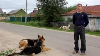 Собака друг человека , а дрессировщик друг собак!