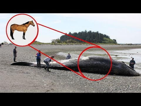 10 Strange Things Ever Found in Animals