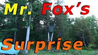 [12.98 MB] Duck Killing Fox Is Going To Get A Surprise Tonight #29 Raising Free Range Ducks