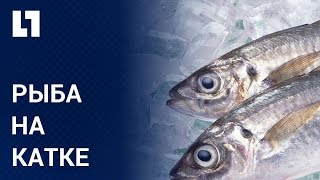 Японцы заморозили тысячи рыб на катке