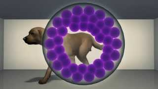 Cloning Dog For Free! Korean Biotech Firm Launches A Competition For Dog Reproduction