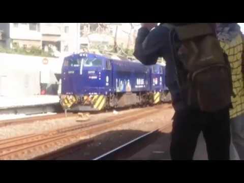 【尼斯丹】台鐵 藍武士號+日台友誼號 電力機車頭 運行首日拍攝