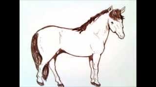 como dibujar un caballo paso a paso   como dibujar un caballo