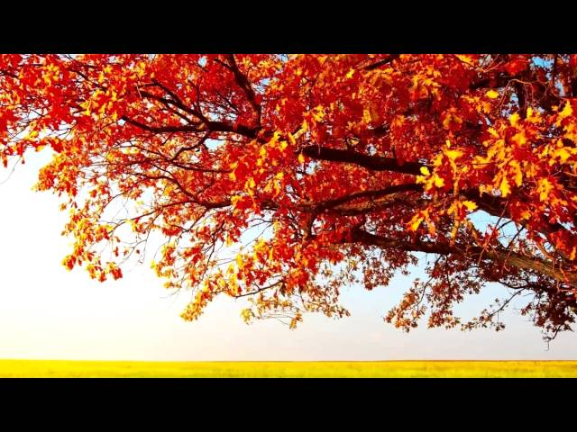 Изображение предпросмотра прочтения – Лариса МихайловнаЛипина читает произведение «Листопад (Осенняя поэма)» И.А.Бунина