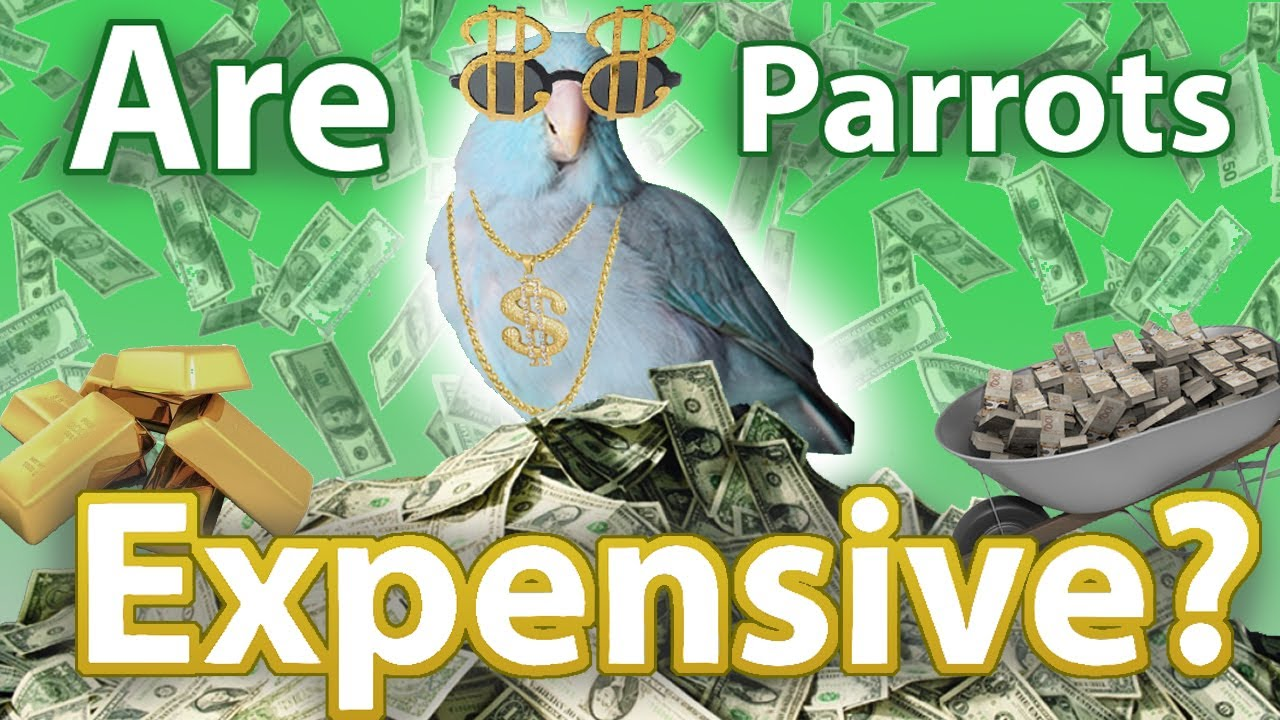 How Much Does a Parrot Cost? | Topics