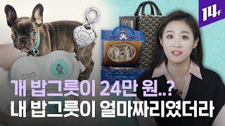 티파니앤코 개 밥그릇 20만 원, 몽클레르 개 패딩 조…