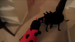 SPIDER DOG ATTACKS LADY BUG