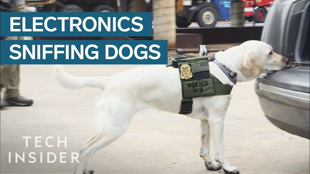 How Dogs Are Trained To Sniff Out Hidden Electronics