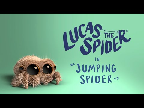 Lucas the Spider  Jumping Spider
