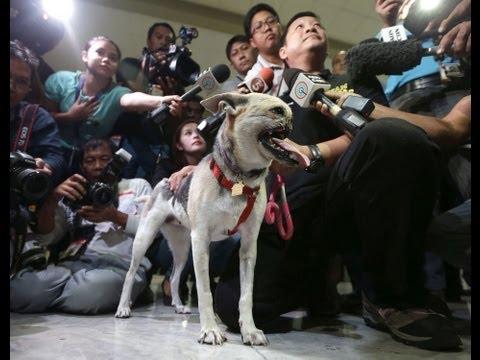 Chó mất mõm được làm đại sứ thiện chí