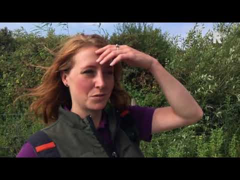 Boswachter op de Slikken van Flakkee: 'Ik heb het mooiste beroep dat er is'