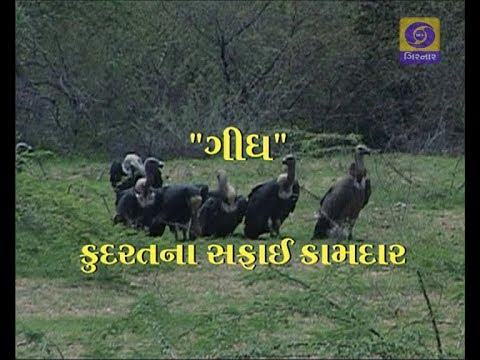 Paryavaran Darshan - Gidh Kudarat na Safai Kamdar