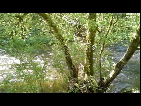 The River Awbeg Flowing Through The Grounds Of Blackwater Castle.