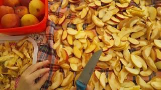 elma kurusu. meyve kurusu. evde pratik atıştırmalar