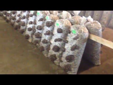 выход грибов вешенка с одного блока