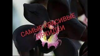 САМЫЕ КРАСИВЫЕ ОРХИДЕИ. THE MOST BEAUTIFUL ORCHIDS