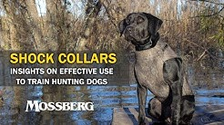 SHOCK COLLARS: Using Electronic Collars On Hunting Dogs