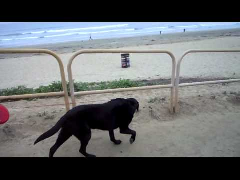 12-Year-Old Dog Visits Ocean For the First Time
