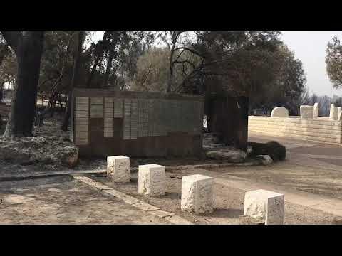 צפו: יער קדושי זגלמביה לאחר השריפות