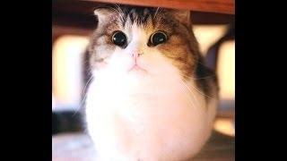 Самый милый кот на свете няшка )