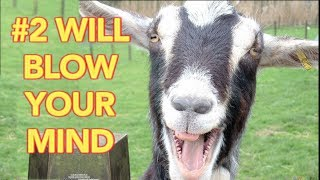 10 Facts About Goats That Will Make You Vomit (with Hal Thompson)
