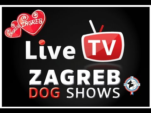 Dog Shows Zagreb 26.11.2016