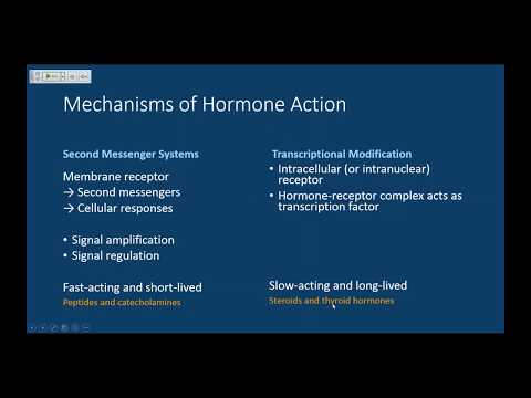 MCAT Endocrinology