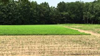 30 acres of Land For Sale in Gates County, NC: East Farm Stand