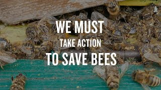 Without Bees, the Foods We Love Will Be Lost