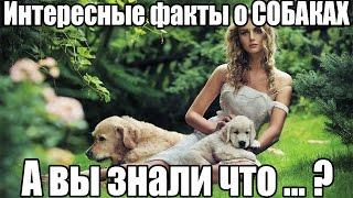ТОП 15 интересные факты про СОБАК. А вы знали что..? Собака. Породы собак. Собаки фото.